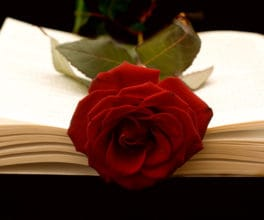 Rose in a book