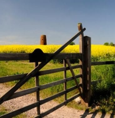 Country gate by field with yellow crop