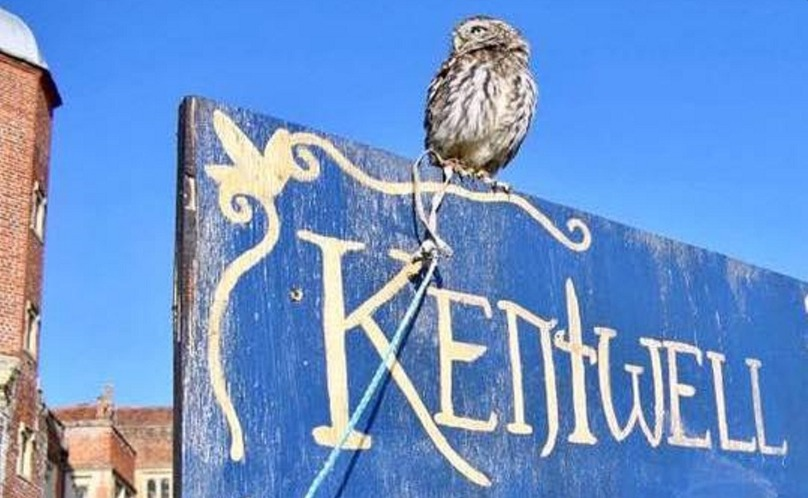 Magic Kentwell owl on sign