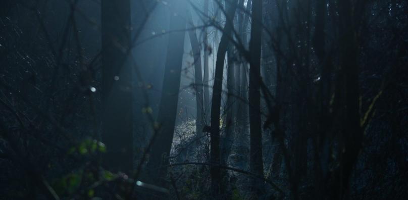 Dedham Vale Woodland at Night