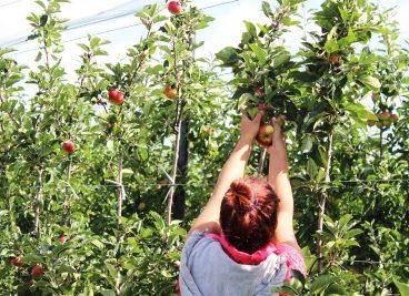 Bill & Devora in the apple orchards